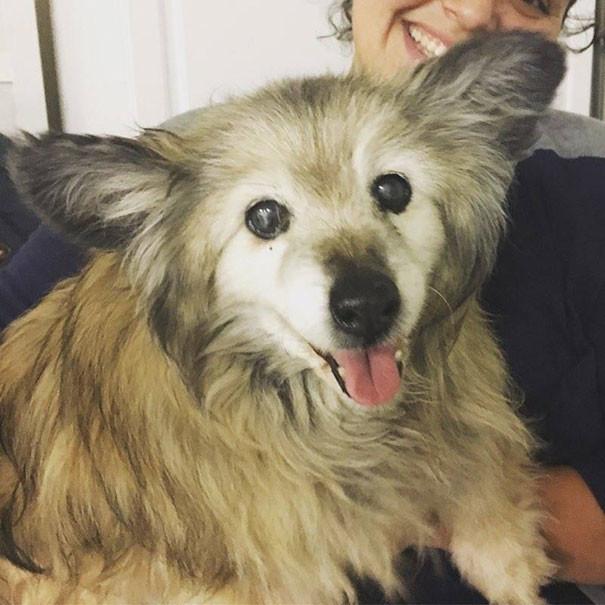 Старая собака была обречена, но вмешался счастливый случай люди и звери, собаки, спасение, счастливый конец