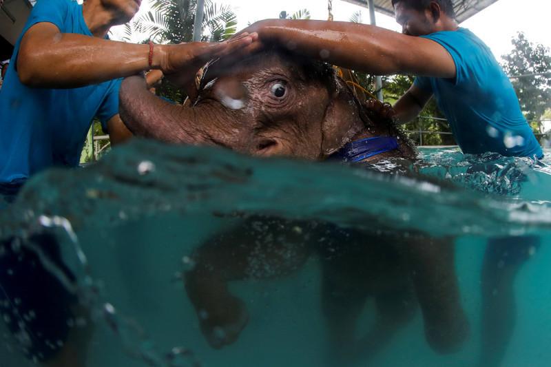 Как слона учат в воде заново ходить животные, слон