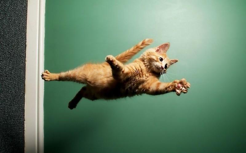 10 котеек, которые не знакомы с физикой fail, видео, котики, прыжки