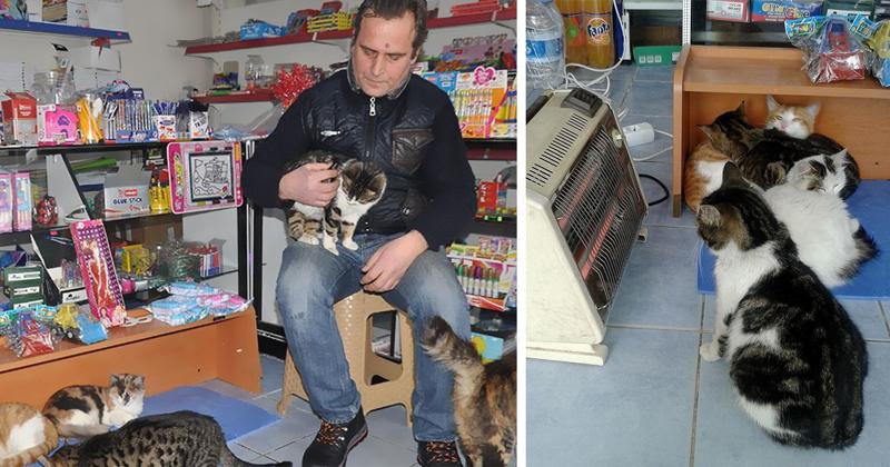 Сильнейшая снежная буря обрушилась на Стамбул, и вот как люди спасают бездомных животных буря, животные, снег, спасение, стамбул