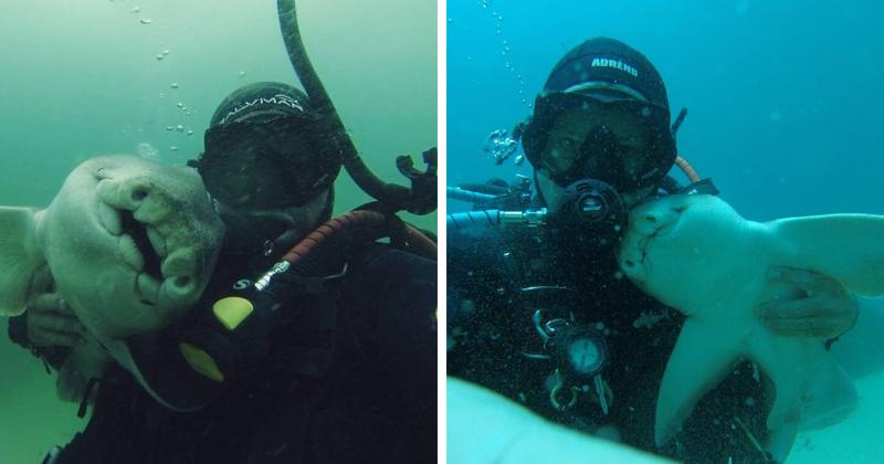 Любительница объятий: как акула уже 7 лет дружит с австралийским дайвером акула, дайвер, дружба