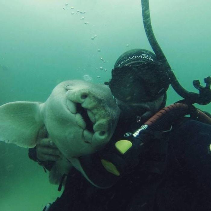 """""""Я начал играть с ней 7 лет назад, тогда она еще была мальком около 15 см в длину"""" акула, дайвер, дружба"""