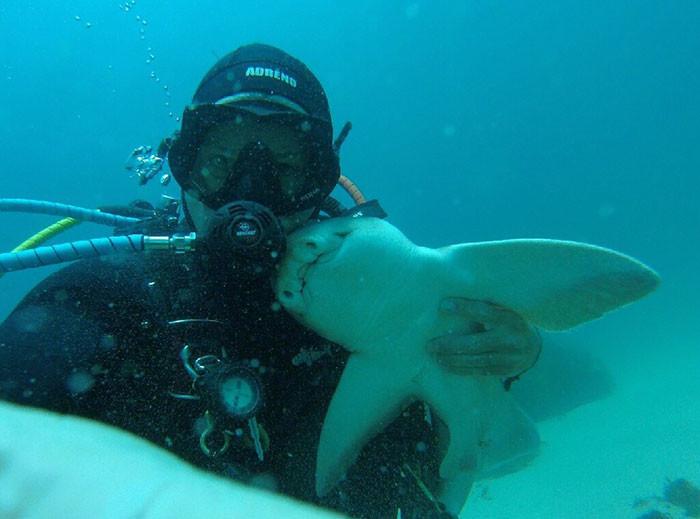 Рик Андерсон и его подружка, австралийская бычья акула акула, дайвер, дружба
