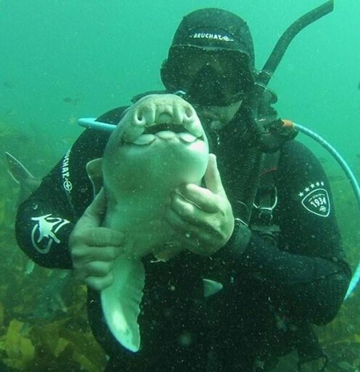 Рыбка всегда узнает своего друга и подплывает к нему за порцией объятий акула, дайвер, дружба