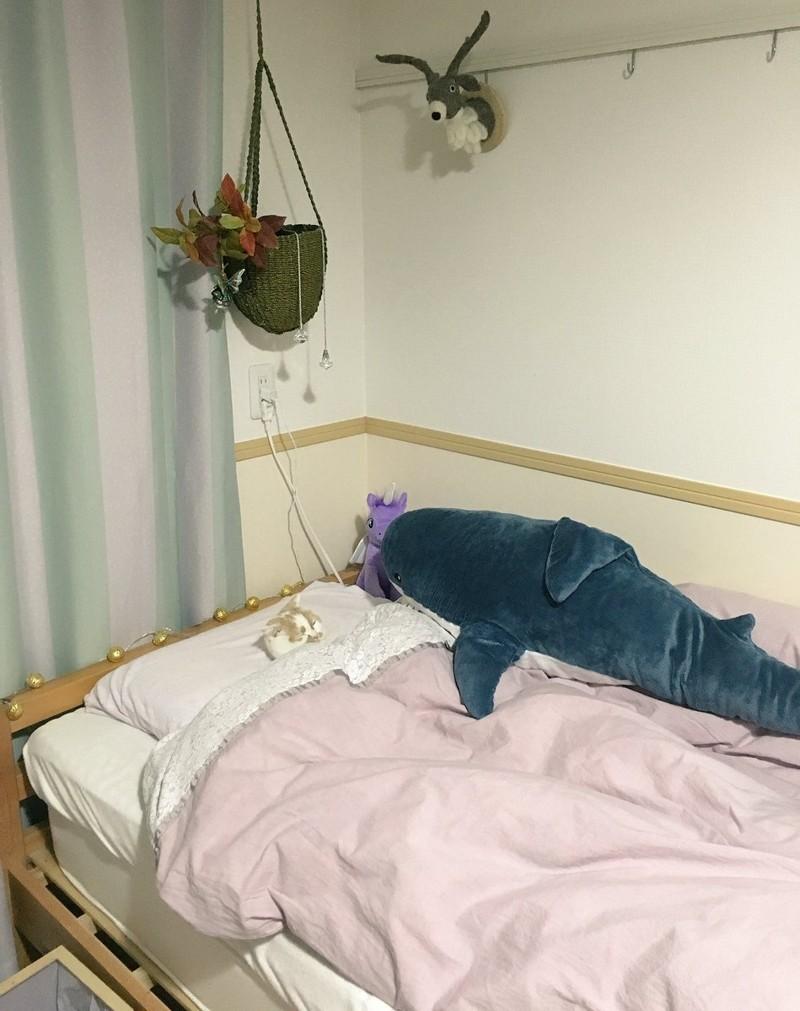 Уютные котики спят в кроватях как люди. Лучший флешмоб из Японии в кроватке, животные, коты