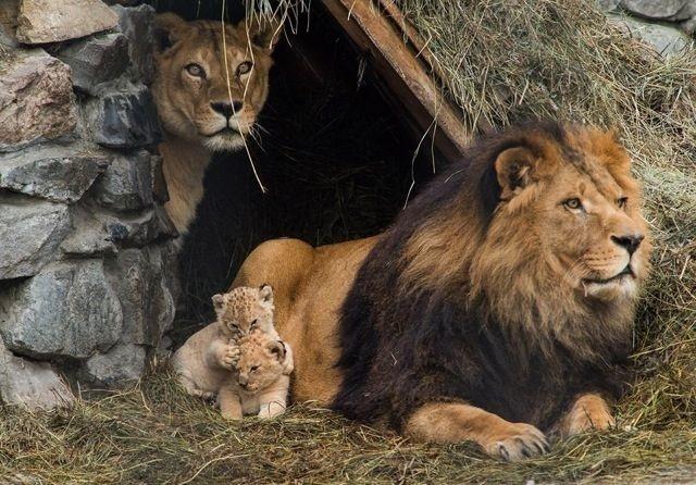 Очаровательные семейные портреты животных животные, природа, фото