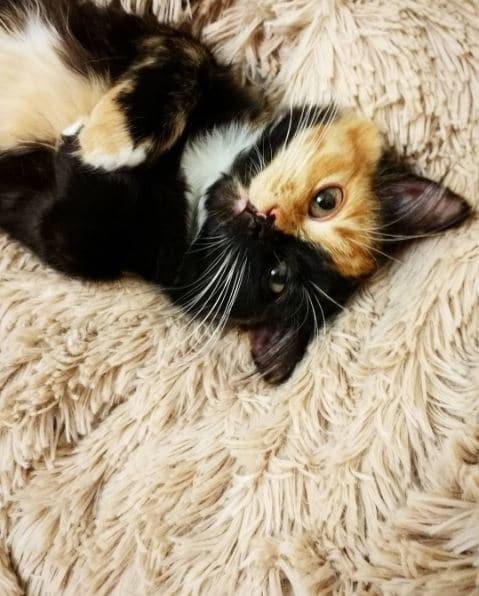 Поели - можно и поспать! гены, кошка, мутации, причуды природы