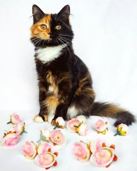 Кошка в розах гены, кошка, мутации, причуды природы