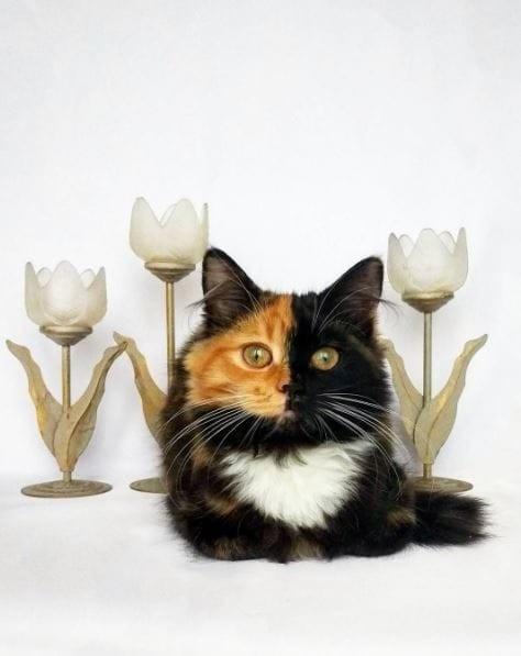 Фотомодель гены, кошка, мутации, причуды природы