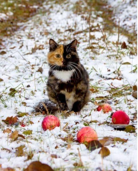 Зимняя прогулка гены, кошка, мутации, причуды природы