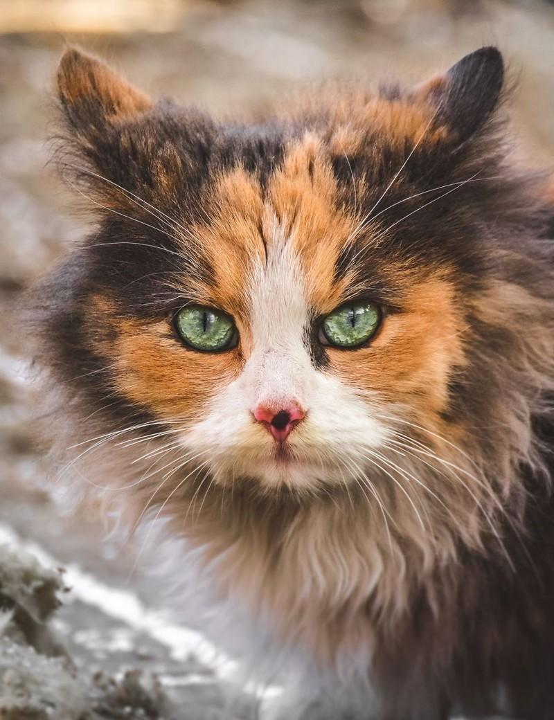 Картинкой, картинки о котятах бездомных