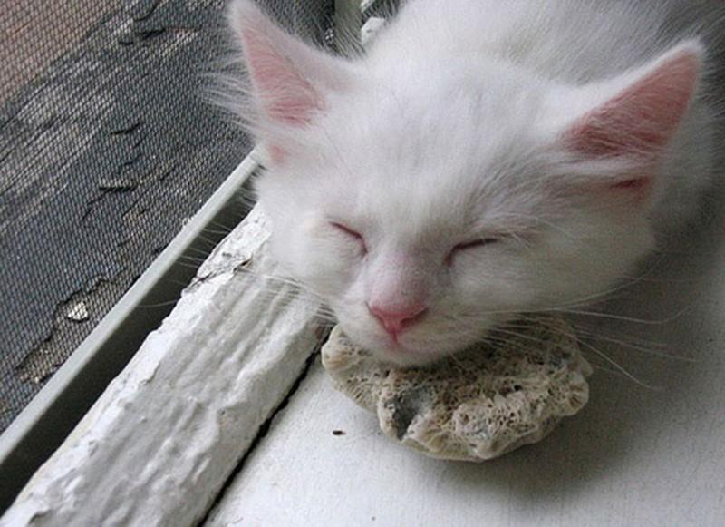 http://petpop.cc/upload/post/2017/03/13/65fa3834e9f4e235daa7d198a688c72a/1253907794-1253885650-dreaming-cat-4.jpg