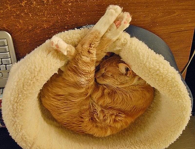 Прикольные спящие коты картинки