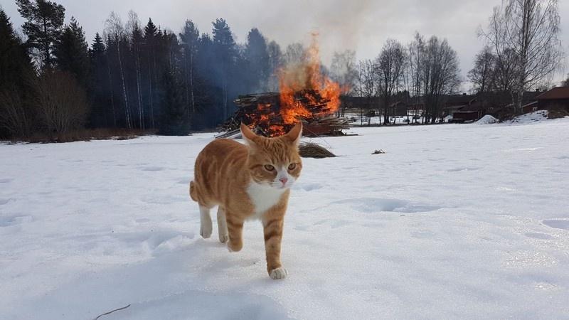 50 случаев, нет-нет да и кошки на беду показали темную сторону своей личности