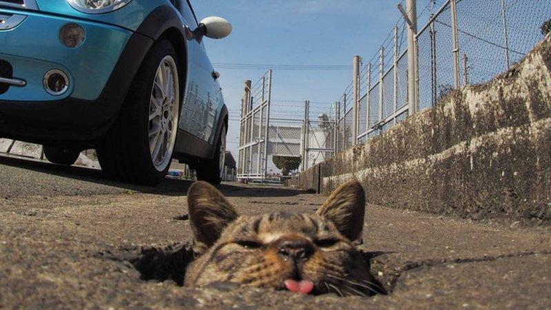Как бездомные коты развлекаются на Японии