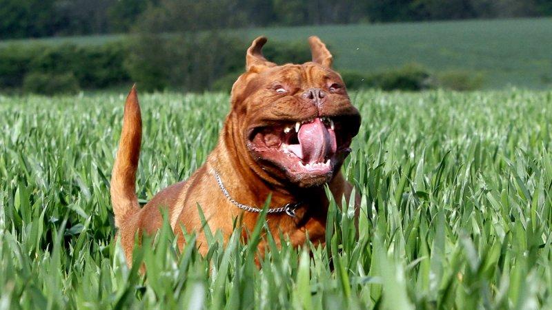 Фотограф снял бегущих собак, да сие ужас смешно
