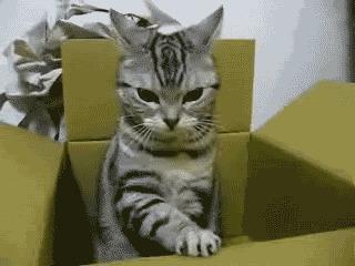 животные, котики, кошки, причуды, странные