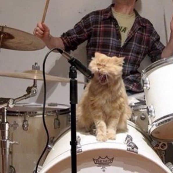 """И им нравится выступать с """"металлистами"""" животные, котики, кошки, причуды, странные"""
