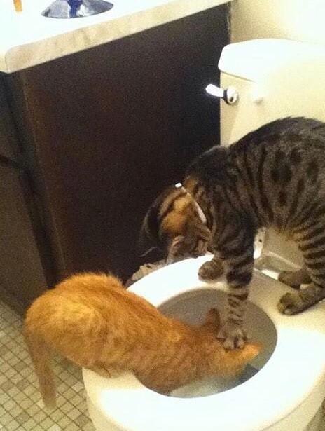 Они пытаются извести собственных братьев животные, котики, кошки, причуды, странные