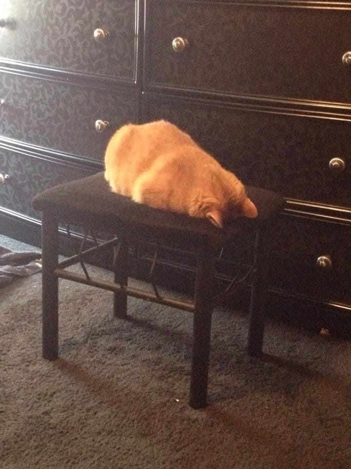 Задремать они могут в буквальном смысле где угодно животные, котики, кошки, причуды, странные