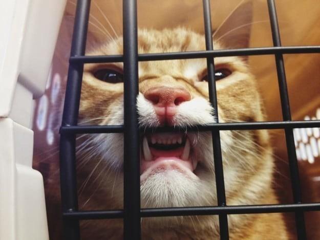 Они неадекватно реагируют на некоторые ситуации животные, котики, кошки, причуды, странные