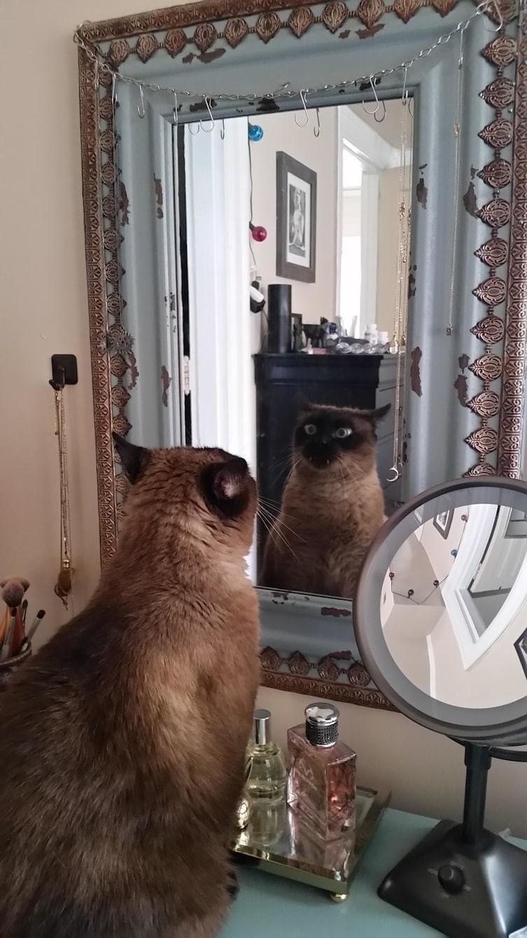 ...и говорят сами с собой, когда нас нет рядом животные, котики, кошки, причуды, странные