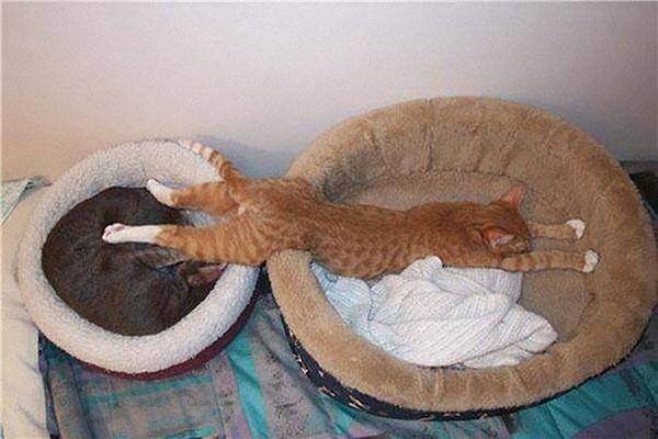 Хочу спать в двух корзинах! животные, кот, прикол, сон