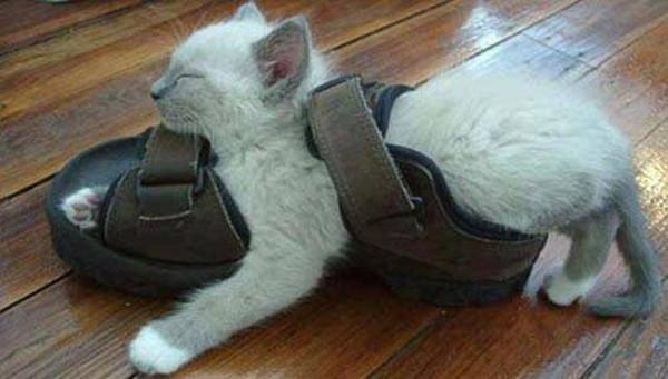 Кот вообразил себя ногой. животные, кот, прикол, сон