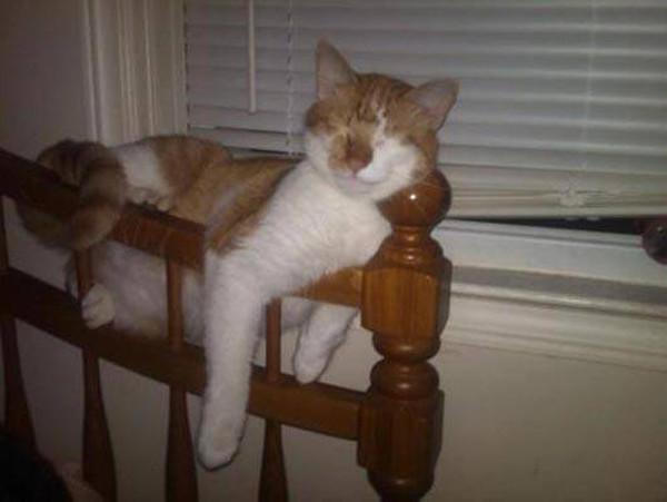 Да, мне удобно! животные, кот, прикол, сон
