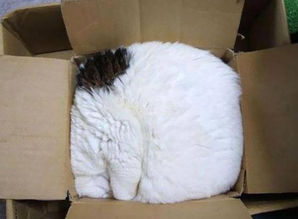 Упаковался. животные, кот, прикол, сон