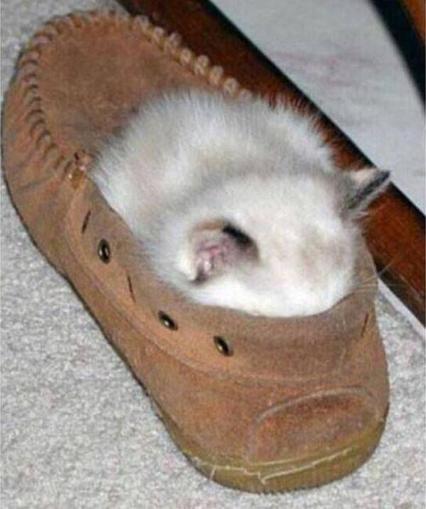 Какой уютный ботиночек... животные, кот, прикол, сон