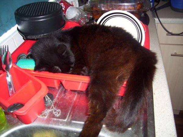 Мыть посуду? Лучше отдохнуть. животные, кот, прикол, сон
