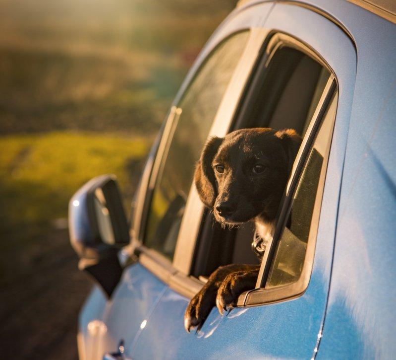 Как правильно перевозить животных в машине?  животные, интересное, полезное, полезные советы