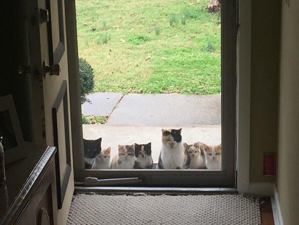 """""""Родители пару недель назад начали подкармливать бездомного котенка. Теперь их крыльцо выглядит так"""" животные в городе, непрошеные гости"""