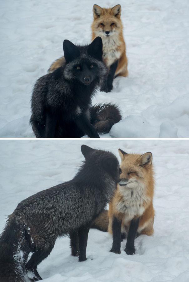 """""""Эти два приятеля родились прошлой весной у меня во дворе. До сих пор иногда приходят навестить"""" животные в городе, непрошеные гости"""