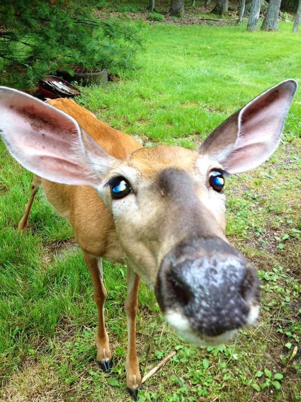 """""""Мы были на отдыхе в горах и этот чувак просто подошел ко мне"""" животные в городе, непрошеные гости"""