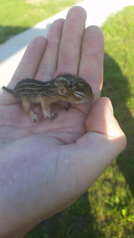 """""""Нашел этого крошку в траве рядом с домом"""" животные в городе, непрошеные гости"""