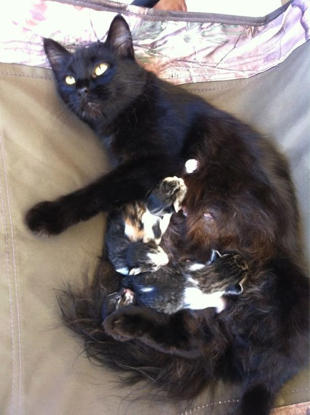 """""""Застал дома вот такую картину. Кошка не моя"""" животные в городе, непрошеные гости"""
