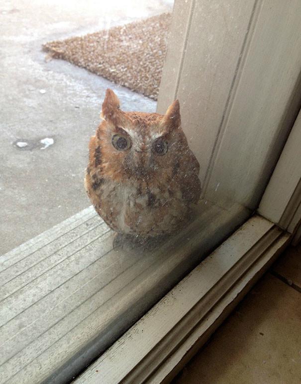 """""""Мы услышали, как кто-то стучит в окно"""" животные в городе, непрошеные гости"""