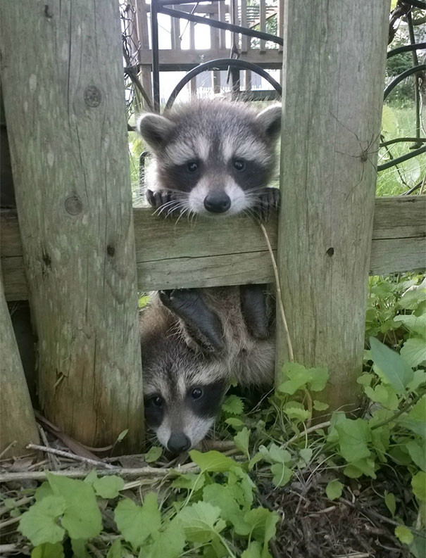 """""""Я только что въехал в новый дом и ко мне уже зашли поздороваться соседи"""" животные в городе, непрошеные гости"""