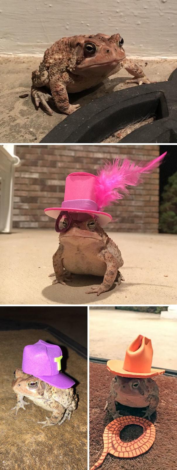 """""""Он приходил на мое крыльцо каждый день и я начала мастерить для него шляпки"""" животные в городе, непрошеные гости"""