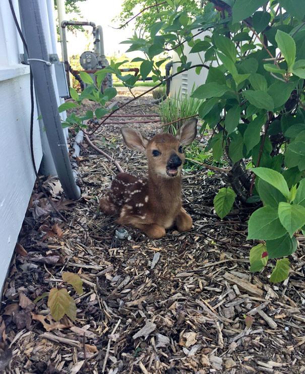 Бемби в каменных джунглях животные в городе, непрошеные гости