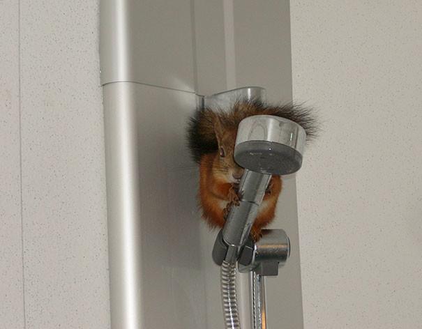 """""""Как-то я пришел домой и увидел это. Моя кошка была в шоке"""" животные в городе, непрошеные гости"""