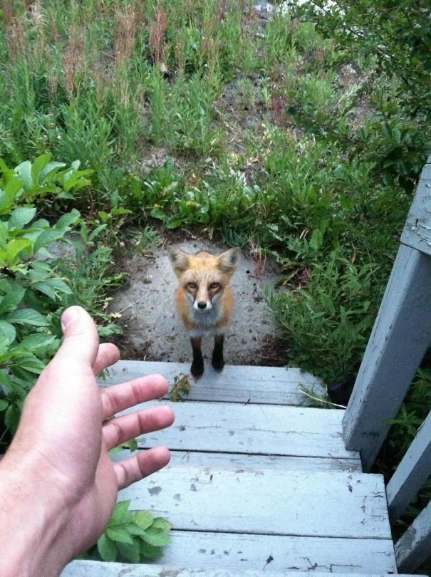 Он хотел зайти в дом, но что-то его удержало животные в городе, непрошеные гости