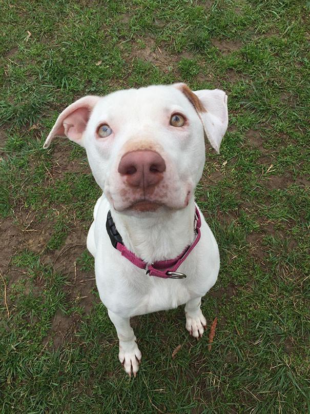 Брошенная собака не может перестать улыбаться после того, как нашла новый дом   животные, собака, улыбка