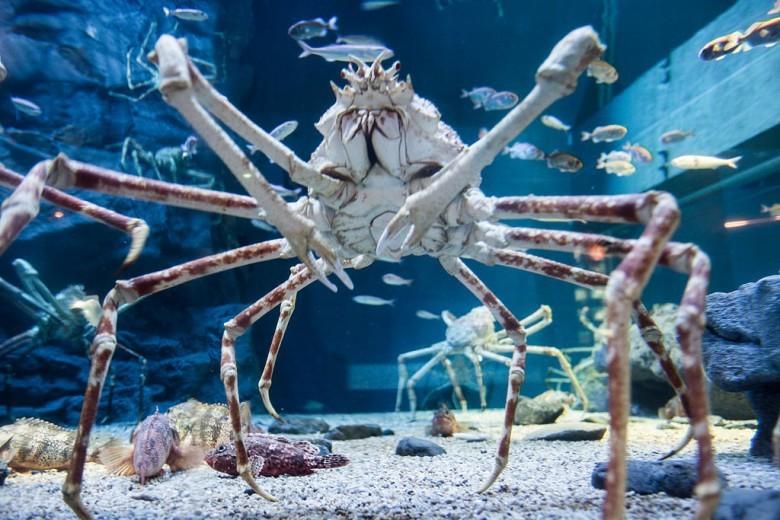 15. Японский краб-паук животные, мир, страх
