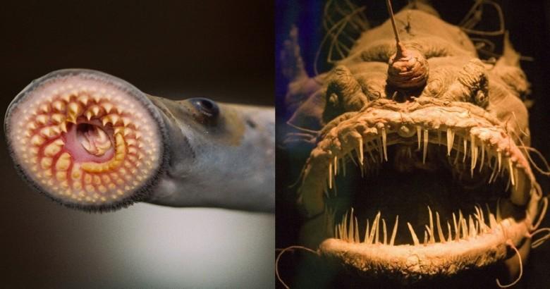 15 животных, которые действительно могут вас напугать животные, мир, страх