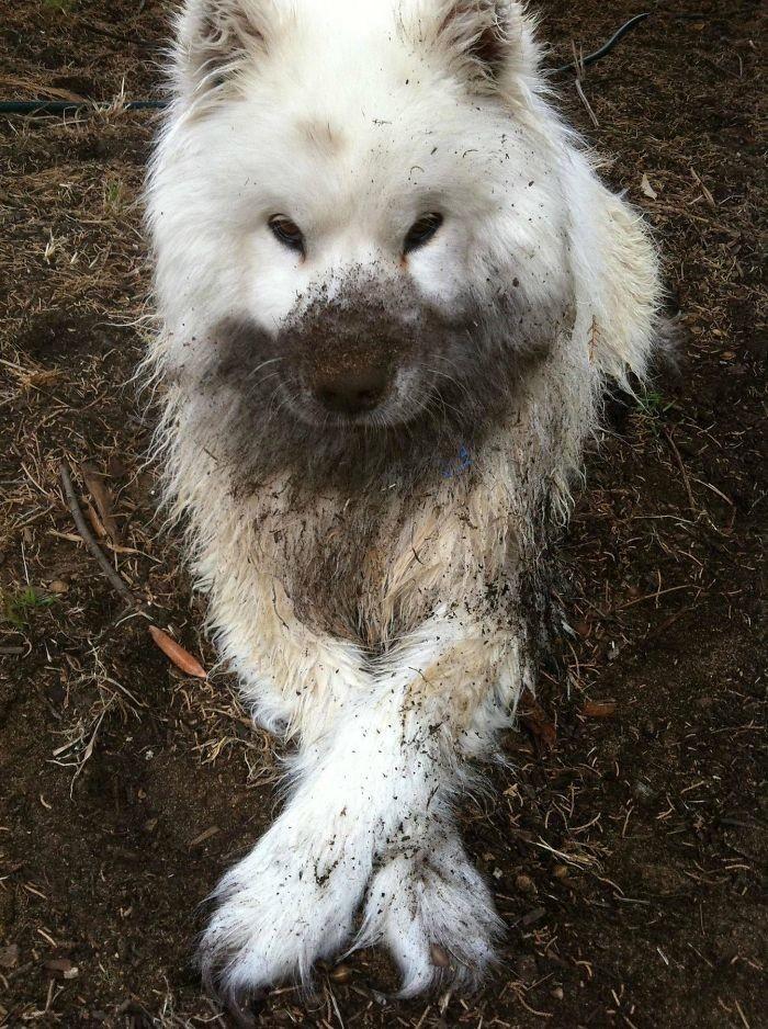 7. Покопался в земле  грязь, животные, фото