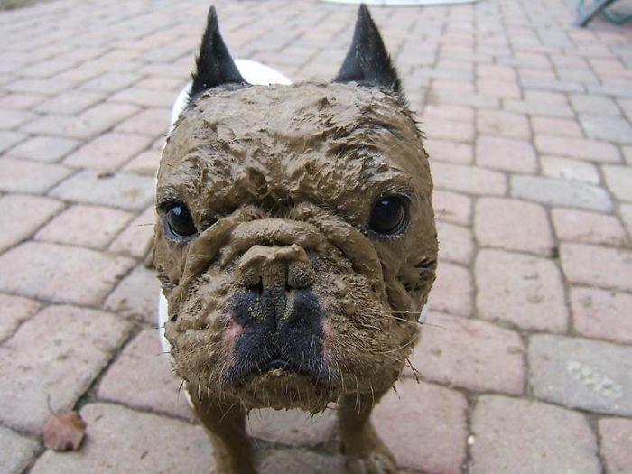 14. Ни капли сожаления  грязь, животные, фото