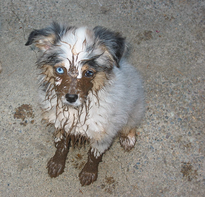 26. Виновен  грязь, животные, фото